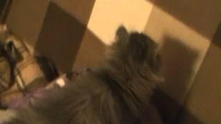 Изумительная киска(котенок) в дар на новый год