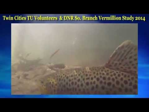 Twin Cities Trout Unlimited Volunteers & DNR Study Vermillion 2014