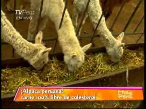 CRIANZA DE ALPACAS, ALTERNATIVAS DE CONSUMO