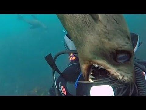 【閲覧注意】こっわ!恐怖すぎる河&海の生物達の人間襲撃シーン!!! animal attack - YouTube