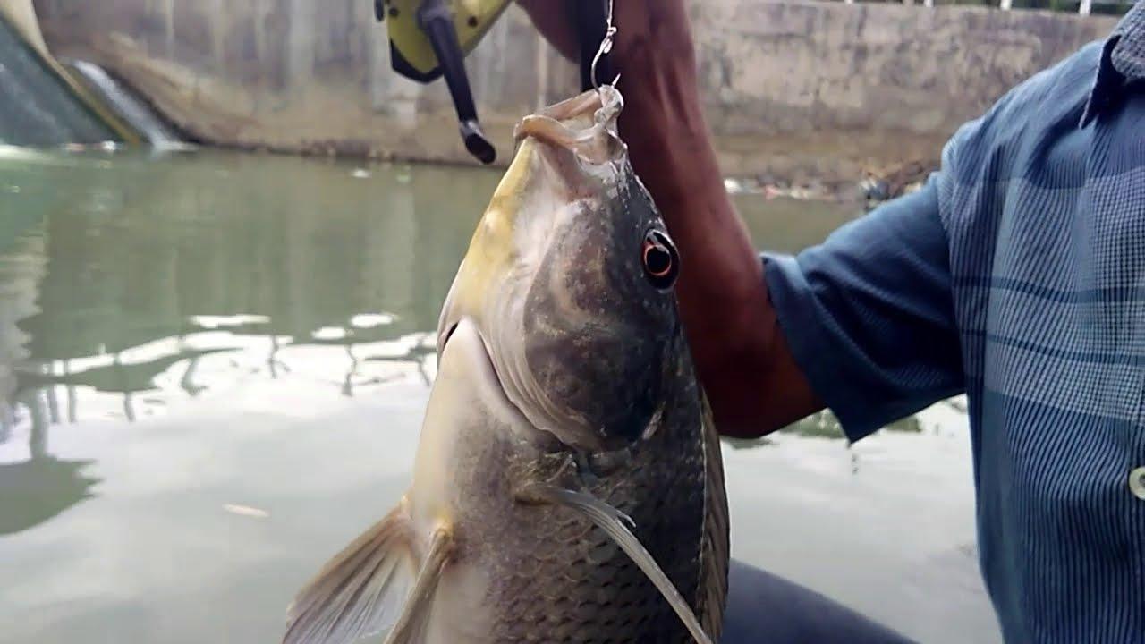 Mancing Ikan Nila Besar Di Bendungan Youtube