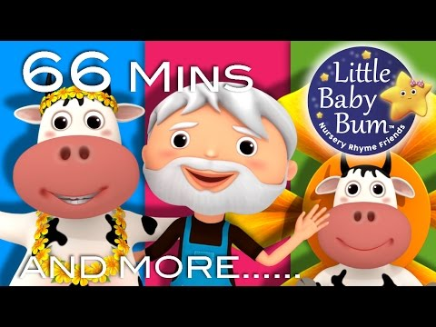 DAISY | BINGO | Plus Lots More Nursery Rhymes | From LittleBabyBum!