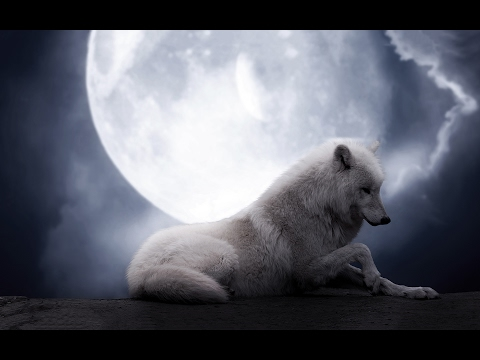 🐺 1 Hour of Wolves Howling Sound Coming from Distant