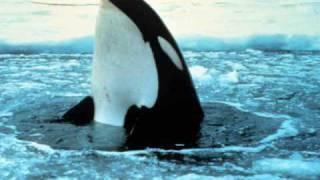 Pure - Nature     ( Antartica )