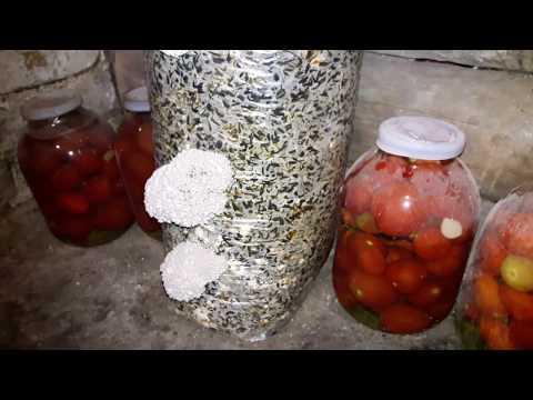Салат из сыра, грибов и яиц - рецепты с фото на