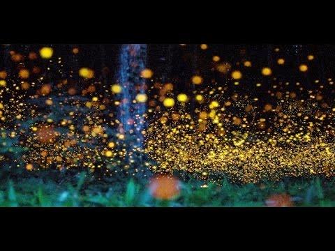 Impresionante conoce el santuario de las luci rnagas en Espectaculo de luciernagas en tlaxcala