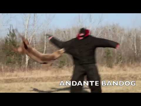 """""""andante-bandog-in-action!-don-´t-need-more-words..""""-(andante-bandog-kennels)"""