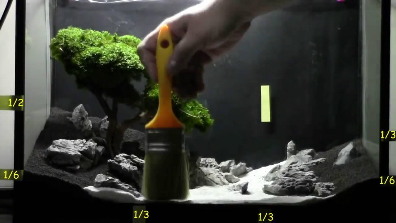 Tutorial : Bonsai Tree Aquascaping   YouTube