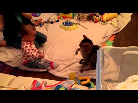 Cat vs Baby Round 1... FIGHT!