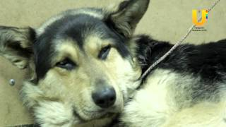 В Агидели неизвестные прострелили собаке лапу из самодельного оружия