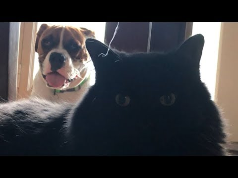 Samson & Leroy
