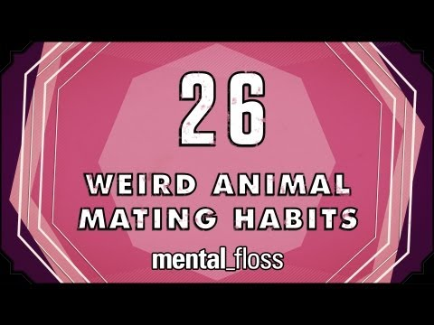 26 Weird Animal Mating Habits - mental_floss on YouTube (Ep. 20)
