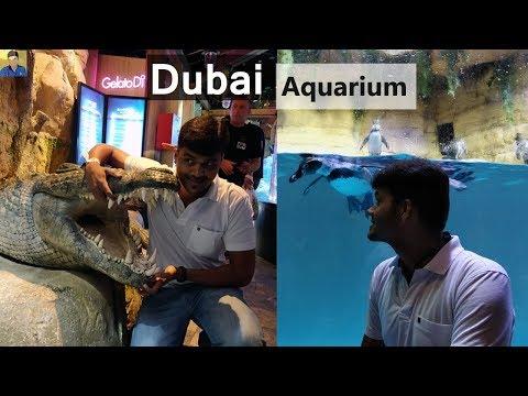 Dubai Mall Aquarium - Met Cutest Friends - Vlog Day 3