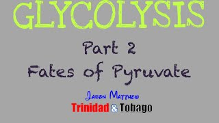 Glycolysis Part 2: Fates of Pyruvate