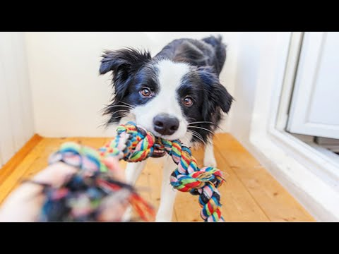 Funniest Dog and Cat Toy Reaction 🐶🐱[Funny Pets]