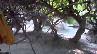 Vrindavan Darshan Part 14 Nidhivan