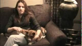 The Dog Addict - Basenjis 101
