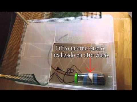 Tortuguero casero youtube for Tortuguero casero