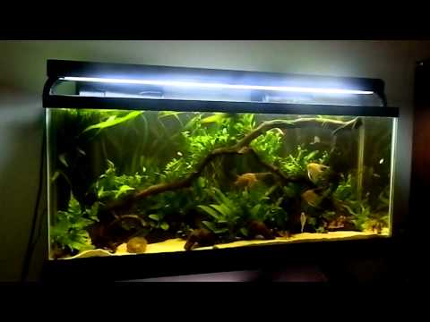 Fish tank question where do you shop youtube for Fish tank riddle
