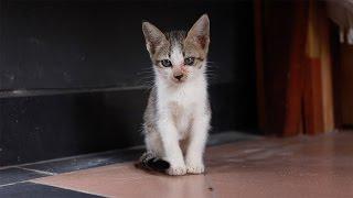 Download Video Cara Rescue Kucing Jalanan MP3 3GP MP4