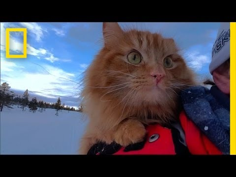 Watch: Skiing With Adorable Adventure Cat Jesperpus | National Geographic