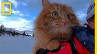 بالفيديو.. تعرف على أشهر قط نرويجي يهوى التزلج