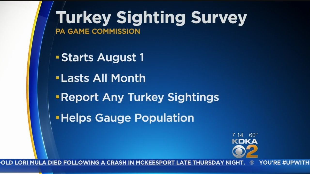 PA Game Commission Looking For Help Tracking Wild Turkey Population