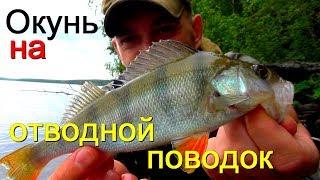Рыбалка! Окунь на отводной поводок. Ловля окуня спиннингом на отводной поводок