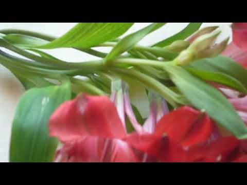 Альстрёмерия -новомодный цветок.