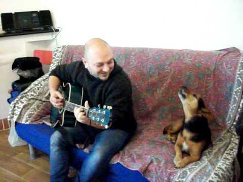 il cane che canta.avi