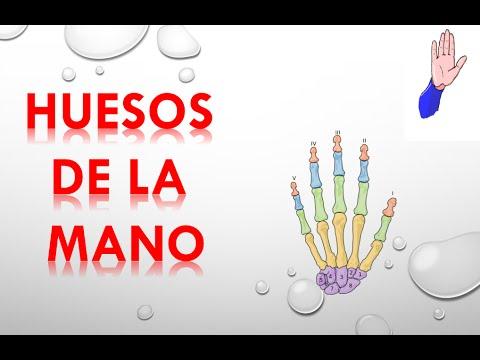 HUESOS DE LA MANO - YouTube