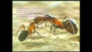 Das Wunder der Ameise [Islam] [HD]