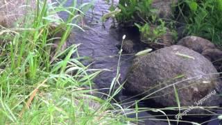 Лесной ручей. Шум воды. Журчание. Природа. Релакс. Медитация. Сон.