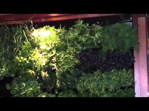 Seasons 52 Santa Monica Blvd Living Walls - Project of the W