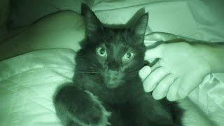 Lassen Sie Ihre Katzen im Bett Schlafen?