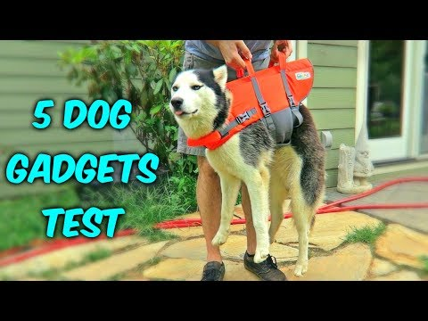 Thumbnail: 5 Dog Gadgets on Amazon - Part 3