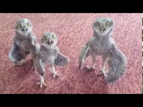 Совы - очень прикольные птицы (21 фото)