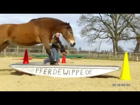 Horse Agility Mit Edelstahl Wippe Youtube
