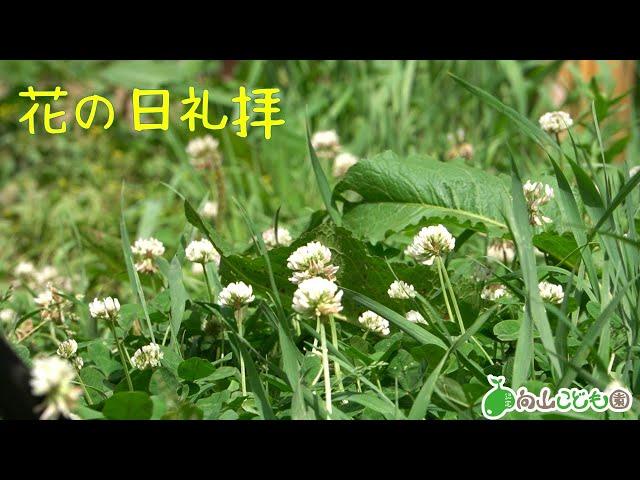 20200607 花の日礼拝
