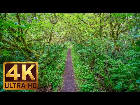Walking in the Woods - 4K UHD Relaxation Video with Bird Singing and Forest Sounds - 20 minutes