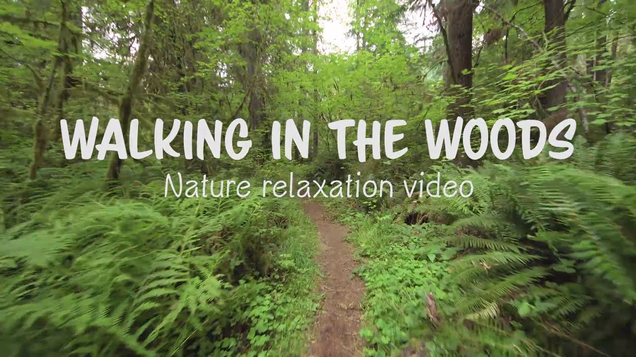 Walking In The Woods - 4k Uhd Relaxation Video With Bird Singing And Forest  Sounds - 20 Minutes  4k Relaxation Channel 21:16 HD