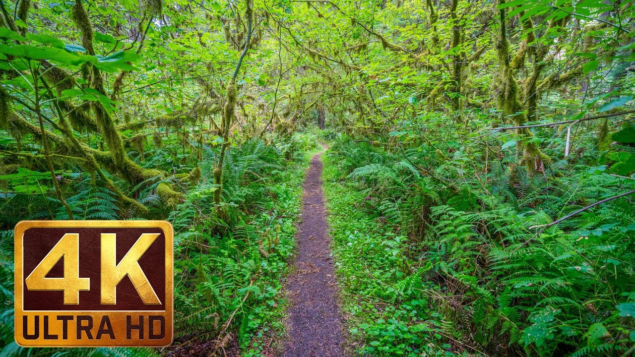 Walking In The Woods 4k Uhd Relaxation Video With Bird