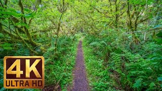 Take a walk in the woods together with new 4k relaxation video from http://www.proartinc.net and http://www.beautifulwashington.com listen to peaceful ...