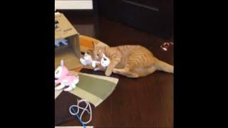 次のは妹子猫「タマ」が餌食に…。 愛情爆発中の「ひろし」は制御不能で...