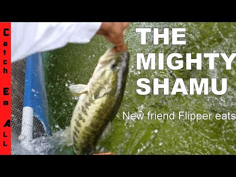 Thumbnail: THE MIGHTY SHAMU! Monster Fish Feeding HUGE PACU EATING...Turtle Revenge