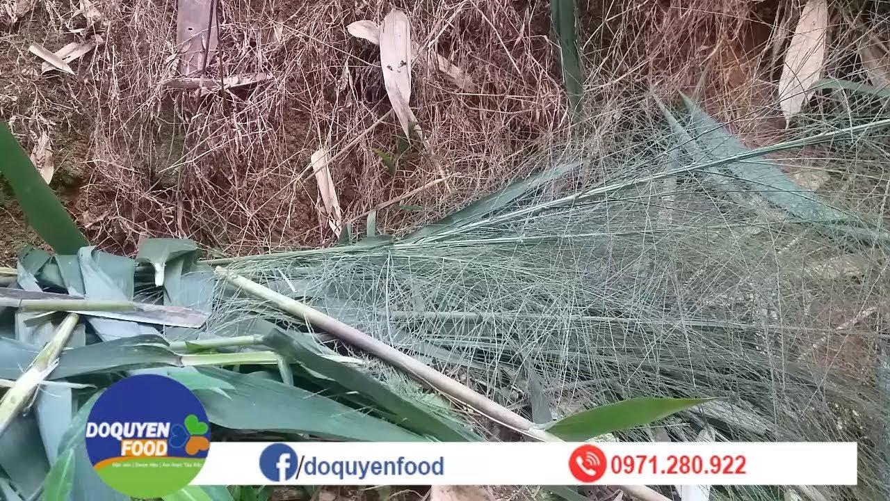 Đi Rừng Lấy BÔNG CHÍT Làm CHỔI ĐÓT, Cách Làm CHỔI BÔNG CỎ Xuất Khẩu Như Thế Nào?Chit Brooms Export