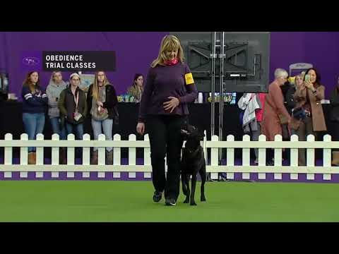 OBEDIENCE Master Obedience part 2 | Breed Judging 2019