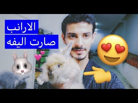 كيف دربت ارانبي الجديده وصارت اليفه 🐰 معلومات بسيطه عن تربية الارانب / Mohamed Vlog
