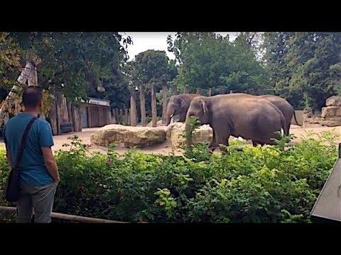 RNZ-Sommertour 2017: Besuch im Heidelberger Zoo