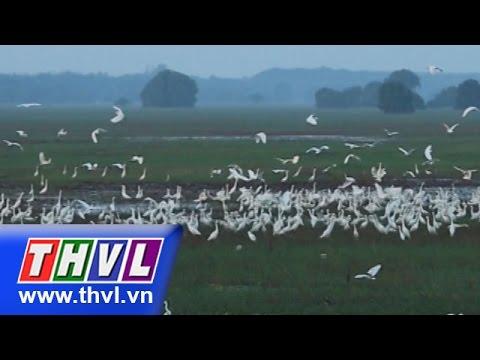 THVL | Ký sự: Về Tràm Chim
